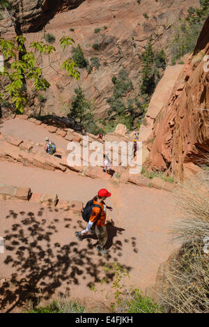 Walters Wiggles on the trail to Angels Landing, Zion National Park, Utah, USA - Stock Photo