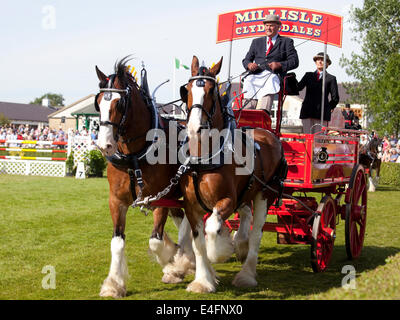 Harrogate, North Yorkshire, UK. 9th July, 2014.  Hugh Ramsay displaying his Mill Isle Clydesdales in the pairs section - Stock Photo