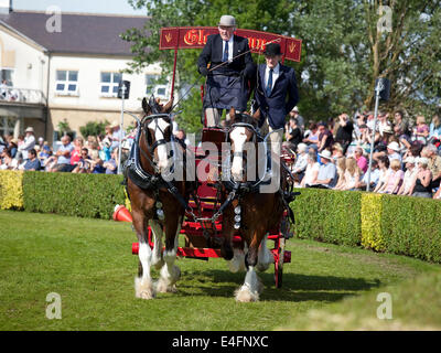 Harrogate, North Yorkshire, UK. 9th July, 2014.  An entrant in the pairs section of the Heavy Horses Turnout displaying - Stock Photo