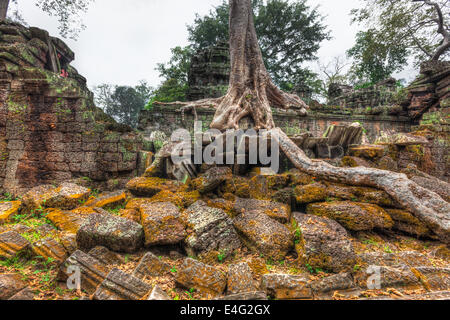 High dynamic range (hdr) image of  ancient ruins with trees, Ta Prohm temple, Angkor, Cambodia - Stock Photo