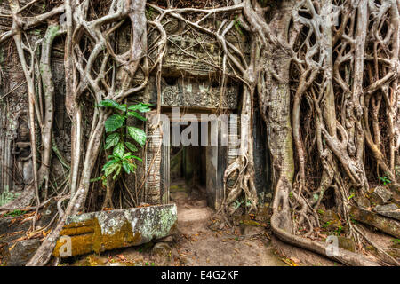 Travel Cambodia concept background - ancient stone door and tree roots, Ta Prohm temple ruins, Angkor, Cambodia - Stock Photo