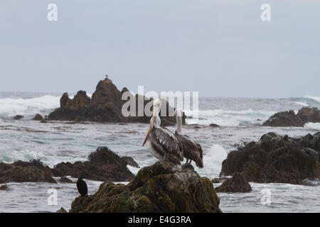 Pelicans on rock at Punta de Choros, La Serena, Chile - Stock Photo