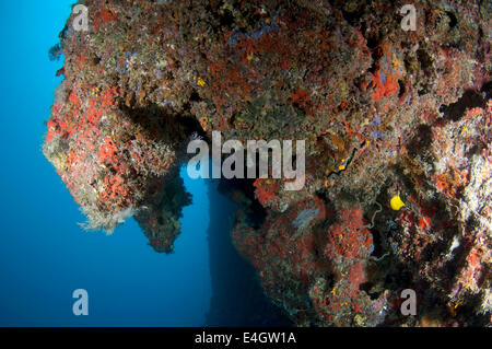 Overhanging coral reef - Stock Photo