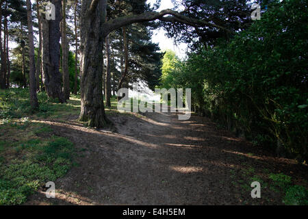 Forest walk with shady trees, Spring sunlight filtering through. - Stock Photo