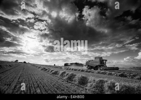 Combine harvester at work in a Norfolk barley field, UK - Stock Photo