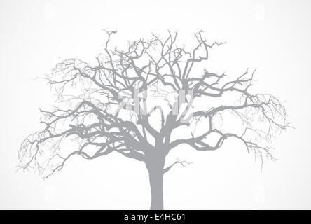 Bare old dry dead tree silhouette without leaf. Oak crown - Stock Photo
