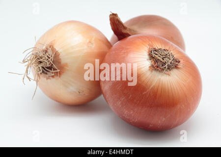 photograph of three onion 'Allium cepa' on white background - Stock Photo