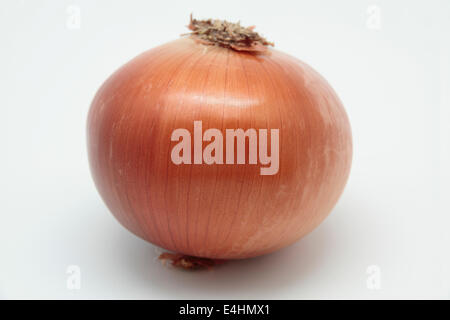 photograph of a onion ' allium cepa' on white background - Stock Photo