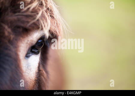 Close up view of a donkey's eye. - Stock Photo