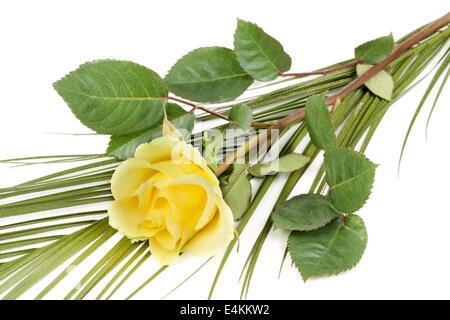 fresh yellow roses - Stock Photo