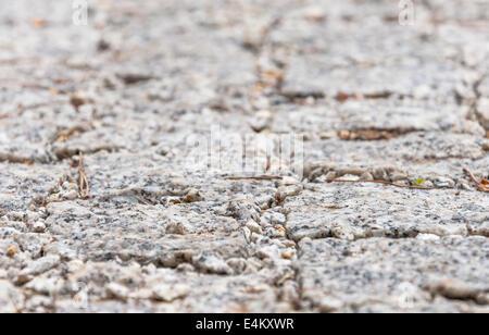 Gray sett bricks background. Sallow depth of field. - Stock Photo