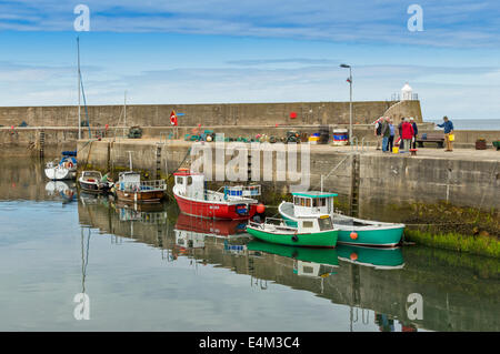 LANDING CRABS FROM CRAB BOATS IN FINDOCHTY HARBOUR MORAY COAST SCOTLAND - Stock Photo
