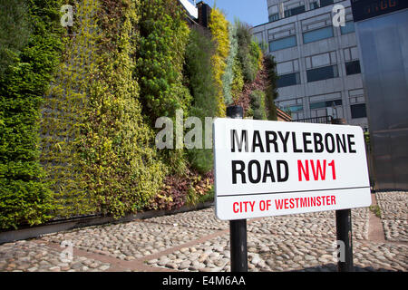 United Kingdom, London - Green Wall on Marylebone Road is part of TFL's green infrastructure plan to improve local - Stock Photo