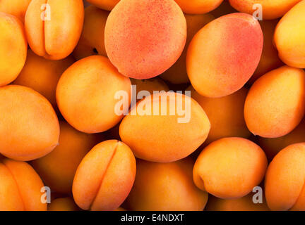 Fresh natural apricot background for you design - Stock Photo