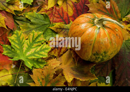 pumpkin on top of bright autumn leaves - Stock Photo