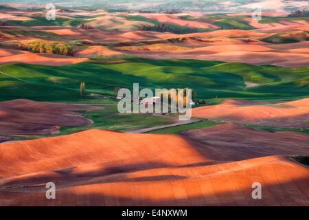 USA, Washington State, Palouse, Farm on wheat field - Stock Photo