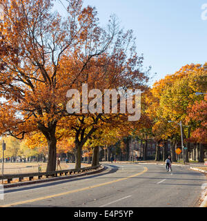 Colorful fall leaves on a sunny day near Harvard University campus in Cambridge, MA, USA in November 2013. - Stock Photo