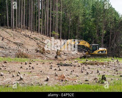 Clearcut Trees with digger. After clearing a large swath of planted forest a earth digger is in place to start digging. - Stock Photo
