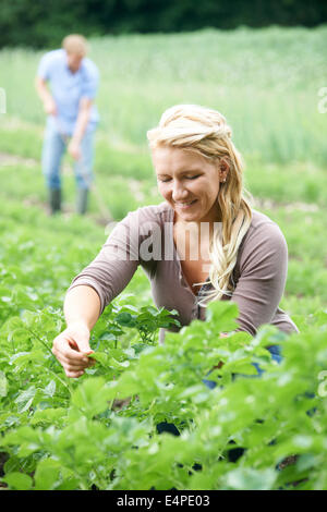 Couple Working In Field On Organic Farm - Stock Photo
