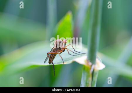 Fliege auf einem Blatt - Stock Photo