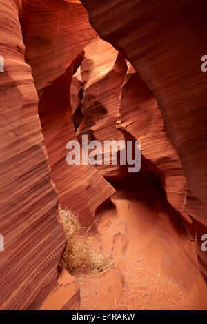 Eroded sandstone formations and tumbleweed in Rattlesnake Canyon, near Page, Navajo Nation, Arizona, USA - Stock Photo
