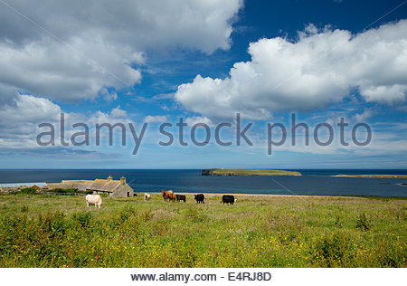 Looking over to the Brough of Birsay from the countryside around Birsay, Mainland, Orkney, Scotland. - Stock Photo