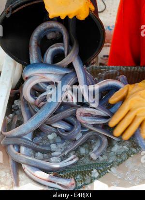 A Danish fisherman cleans eels on his coastal fishing vessel in Vedbaek Harbour north of Copenhagen, Denmark. A - Stock Photo