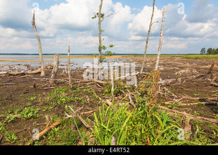 Low water after a long dry on a lake - Stock Photo