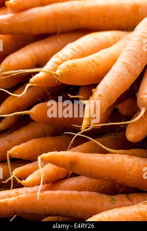 Fresh carrots, symbolic photo for food, freshness, healthy food, Frische Karotten, Symbolfoto fuer Lebensmittel, - Stock Photo