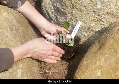 gardening, planting, cultivation, einpflanzen, pflanze, Hause und Garten