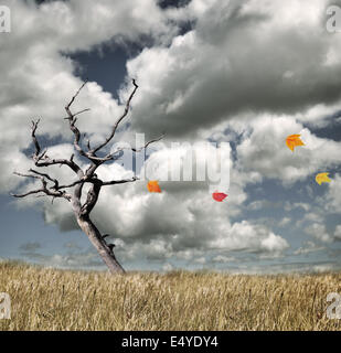 Autumn Concept - Stock Photo