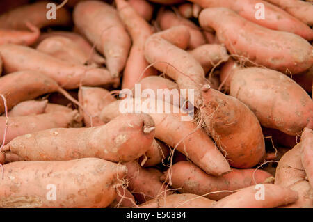sweet potatoes on a farm display - Stock Photo