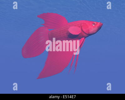 Red betta fish underwater - 3D render - Stock Photo