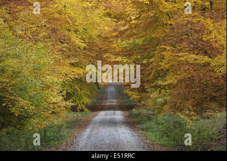 Path through Beech forest, Germany - Stock Photo