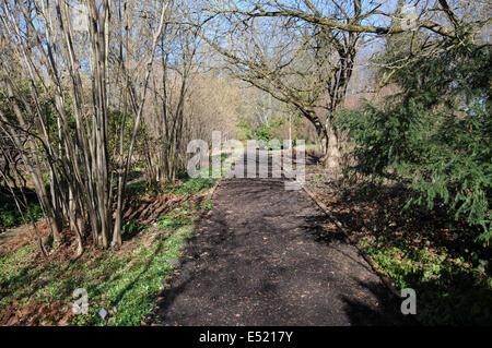 Garten-way with bark-pieces - Stock Photo