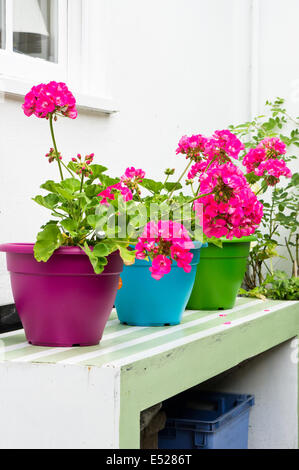 Pink hydrangeas on colorful pots in a garden - Stock Photo