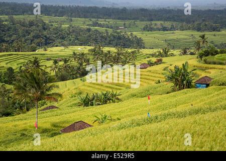 Jatiluwih, Bali, Indonesia.  Terraced Rice Paddies. - Stock Photo