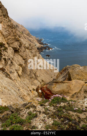 coastline near Point Reyes Lighthouse in Point Reyes National Seashore Marin County California United States North - Stock Photo
