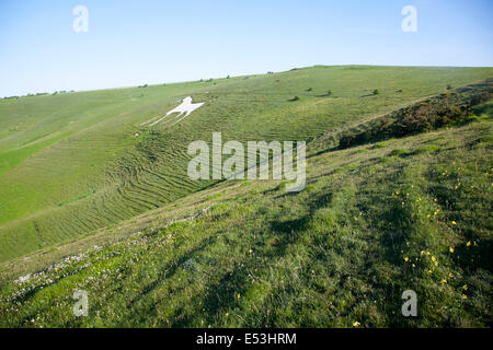White horse figure carved in chalk scarp slope at Alton Barnes, Wiltshire, England - Stock Photo