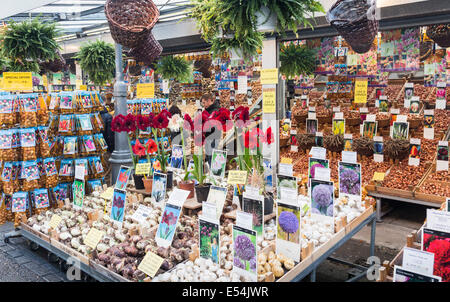 Flowers and other items for sale in Amsterdam's flower market, including amaryllis and a variety of bulbs and seeds - Stock Photo