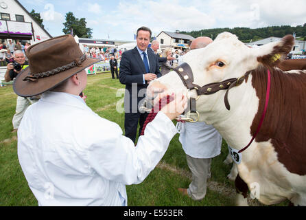 Prime Minister David Cameron meets Cattle Farmers at the Royal Welsh Show, Builth Wells - Stock Photo