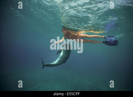Dolphin trainer interacts  bottlenose dolphin (Tursiops truncatus). Dolphin reef, Eilat, Israel, Red Sea - Stock Photo