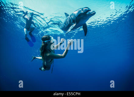 Dolphin trainer and child interacts with juvenile bottlenose dolphin (Tursiops truncatus). Dolphin reef, Eilat, - Stock Photo