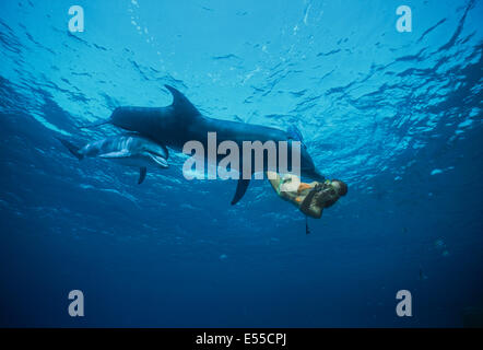 Dolphin trainer interacts with juvenile bottlenose dolphin (Tursiops truncatus). Dolphin reef, Eilat, Israel, Red - Stock Photo