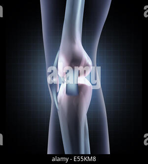 Knee anatomy medical concept as a sideview of a human leg joint with tendons and ligaments as an orthopedic symbol - Stock Photo