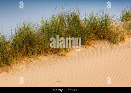 UK, England, East Sussex, Camber Sands, ripples on sand dunes - Stock Photo