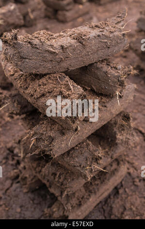 Turf stacks footed for drying to be burnt as fuel to keep houses heated in the winter months. Bog of Allen, Kildare, - Stock Photo