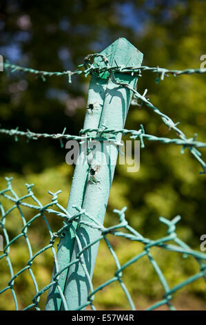 Green old steel barbed wire fence - Stock Photo