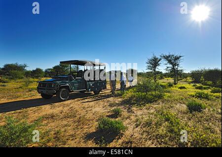 Safari carriage with tourists in blooming savannah, Erindi Game Reserve, Namibia - Stock Photo