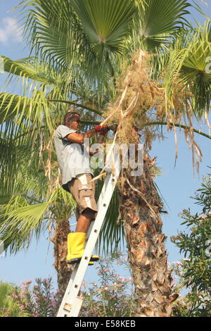 CALIS, TURKEY - 18TH JULY 2014: Unidentified local Turkish male gardener up a ladder trimming a tall palm tree. - Stock Photo
